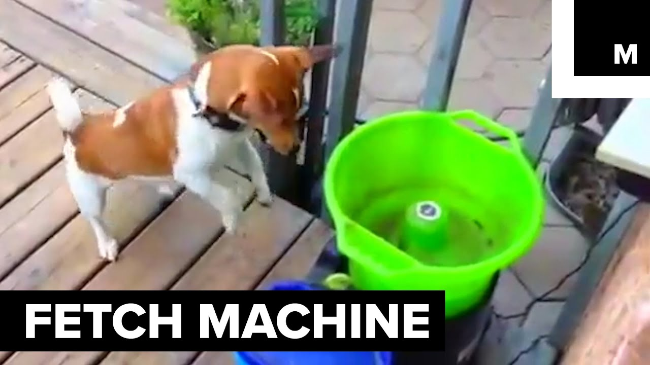 this machine plays fetch with your dog youtube