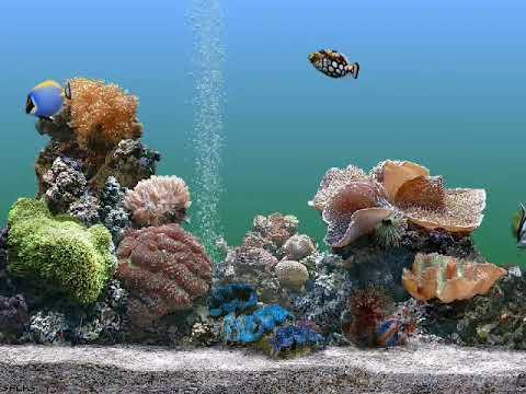 Windows XP Aquarium Theme Screen Saver