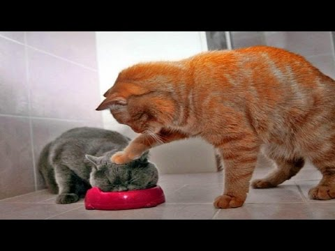 Funny Cats Compilation 2016 | Cat Fails 2016  Funny Amazing Video