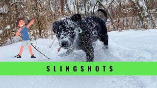 Slingshot Puppy | Reinforcing Maximum Outputs | Grassroots K9