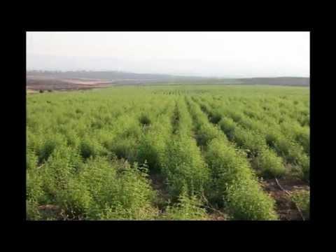 SELIM ULUDAG ORGANIC HERB FARM