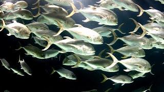 The Largest Aquarium In The World