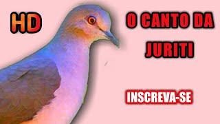 Download Mp3 Canto Para Atrair Juriti