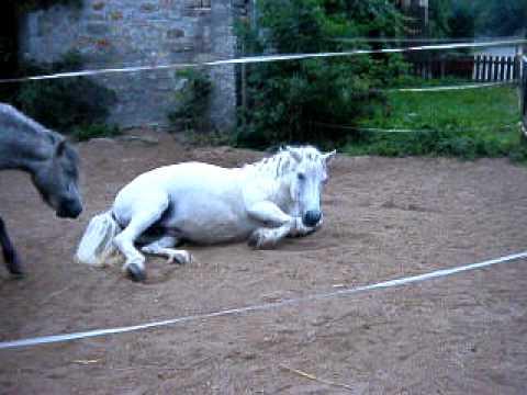 Kotzendes Pferd