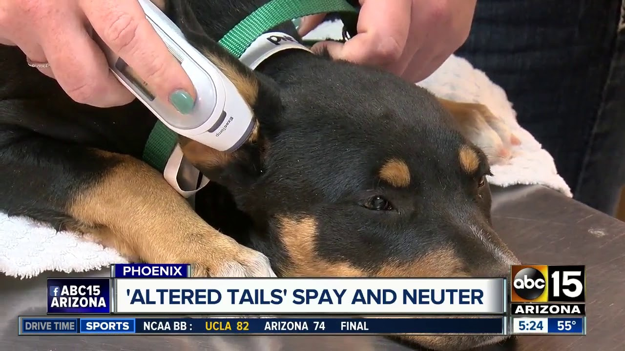Altered Tails Offering Discount On Spay Neuter Services