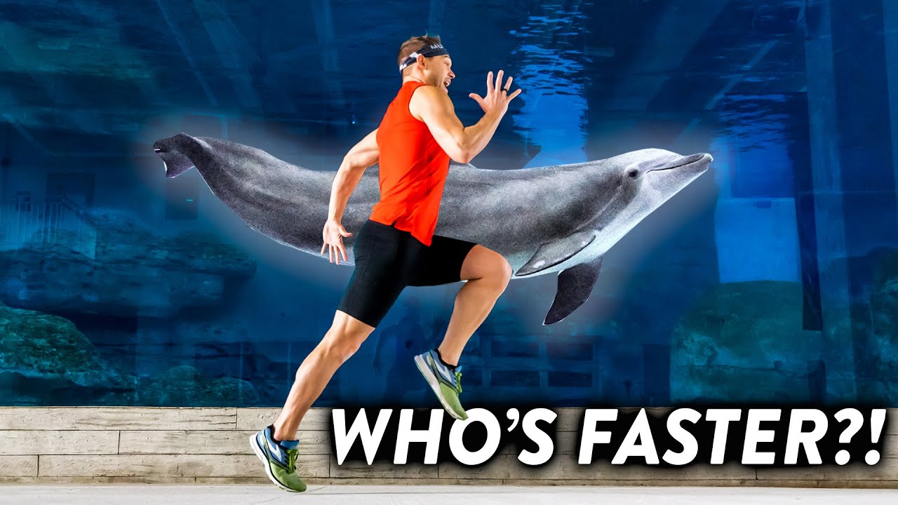 Olympic Runner Races a Dolphin!