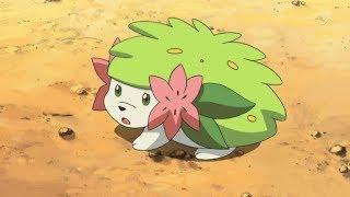 Pokemon Roblox Ladrillo Bronce-Búsqueda de Shaymint:) Parte 10