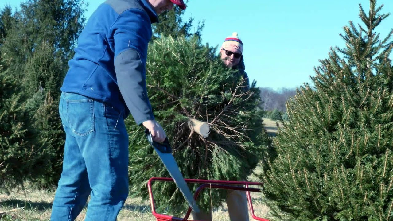 cutting a tree with family at middleburg christmas tree farm in virginia - Middleburg Christmas Tree Farm