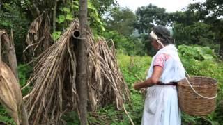 Corazones de Maíz: La Milpa nahuat y tutunakú