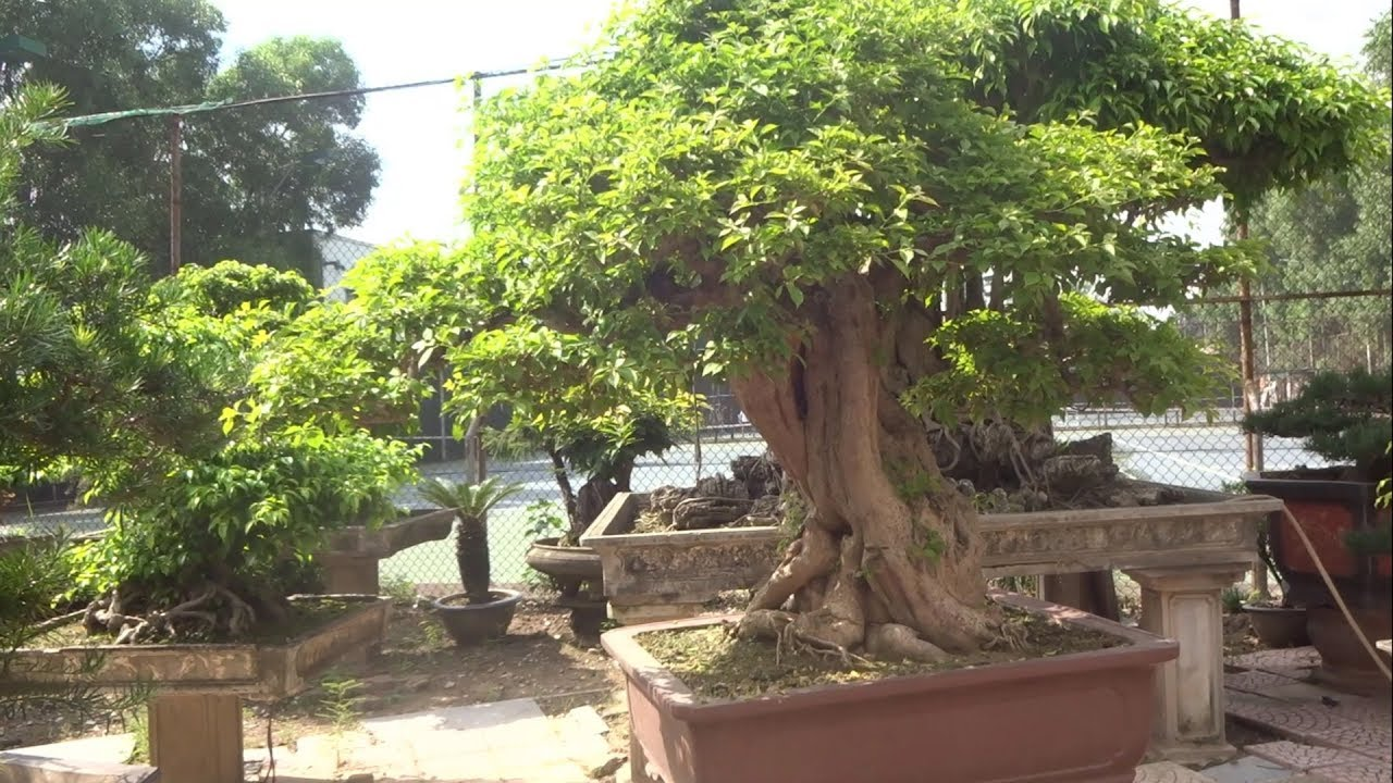 Vườn cây cảnh đẹp, nơi đến lý tưởng cho các bạn yêu cây - Beautiful garden and very nice trees