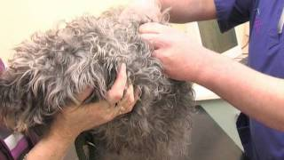 Drove Vets Microchipping