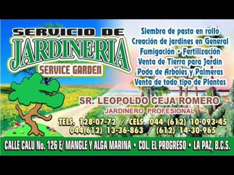servicio de jardineria la paz b c s mexico youtube
