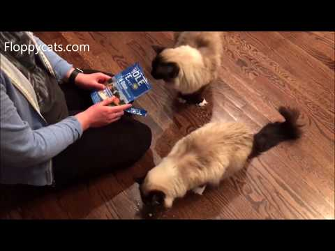 Best Cat Treats 2018: Ragdoll Cats Munch Down on Whole Life Pet Treats Chicken + New Packaging!