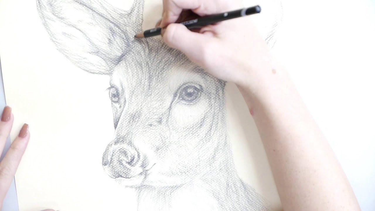 how to make a pencil drawing of a deer youtube