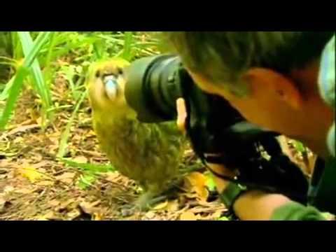 De kneuzige kakapo – Kakapo – Last Chance to See, Stephen Fry