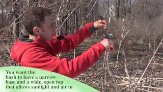 How And When To Prune Blueberries