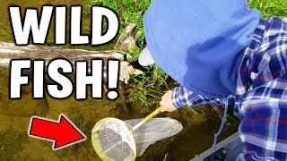 Catching WILD FISH For New INDOOR Pond!