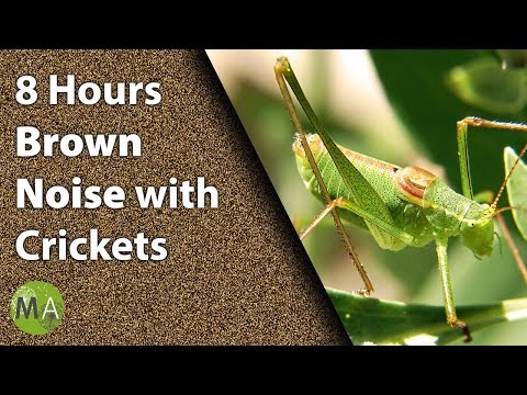 8 Hours Brown Noise With Crickets for Sleep and Relaxation, Tinnitus
