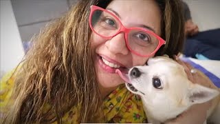 When i EMBARRASSED my CHIHUAHUA | Ss Vlogs :-)