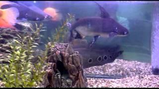 видео БЦ Лихоборский