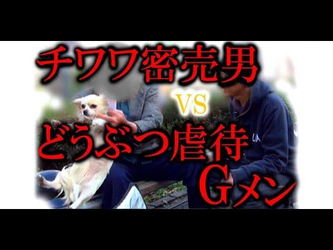 実録!犯罪列島2015冬 チワワ密売男vs動物虐待Gメン