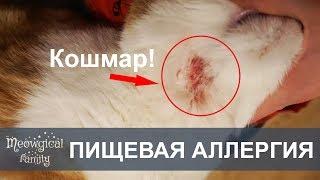 Пищевая АЛЛЕРГИЯ - рана на шее у кошки