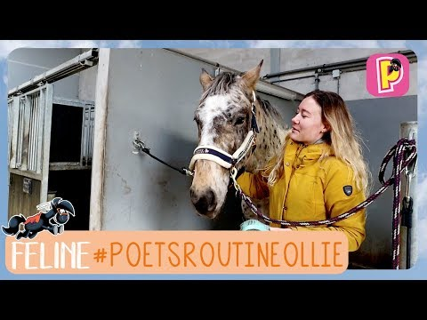 Poestroutine van Ollie | Feline | PennyTV