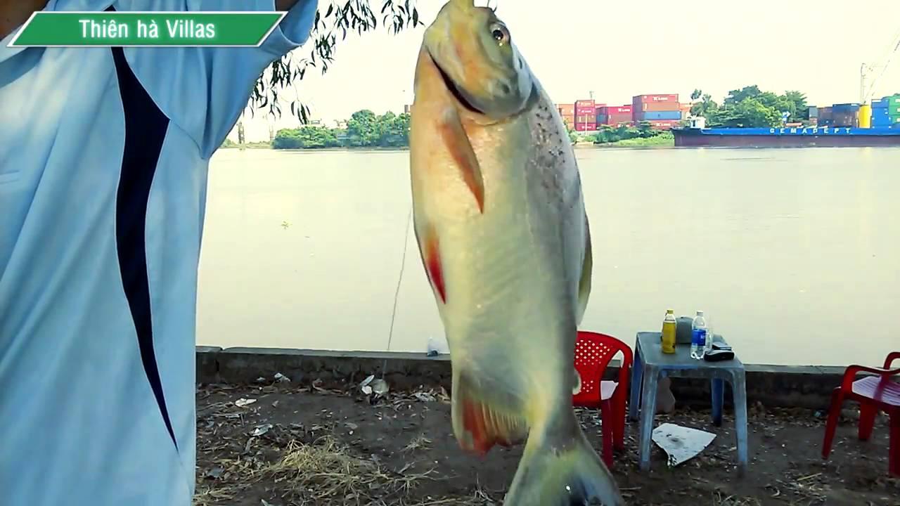 Câu cá trên sông Sài Gòn