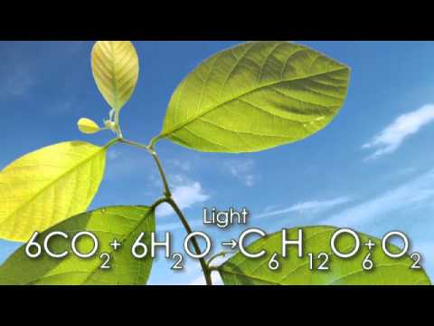 What is CO2?