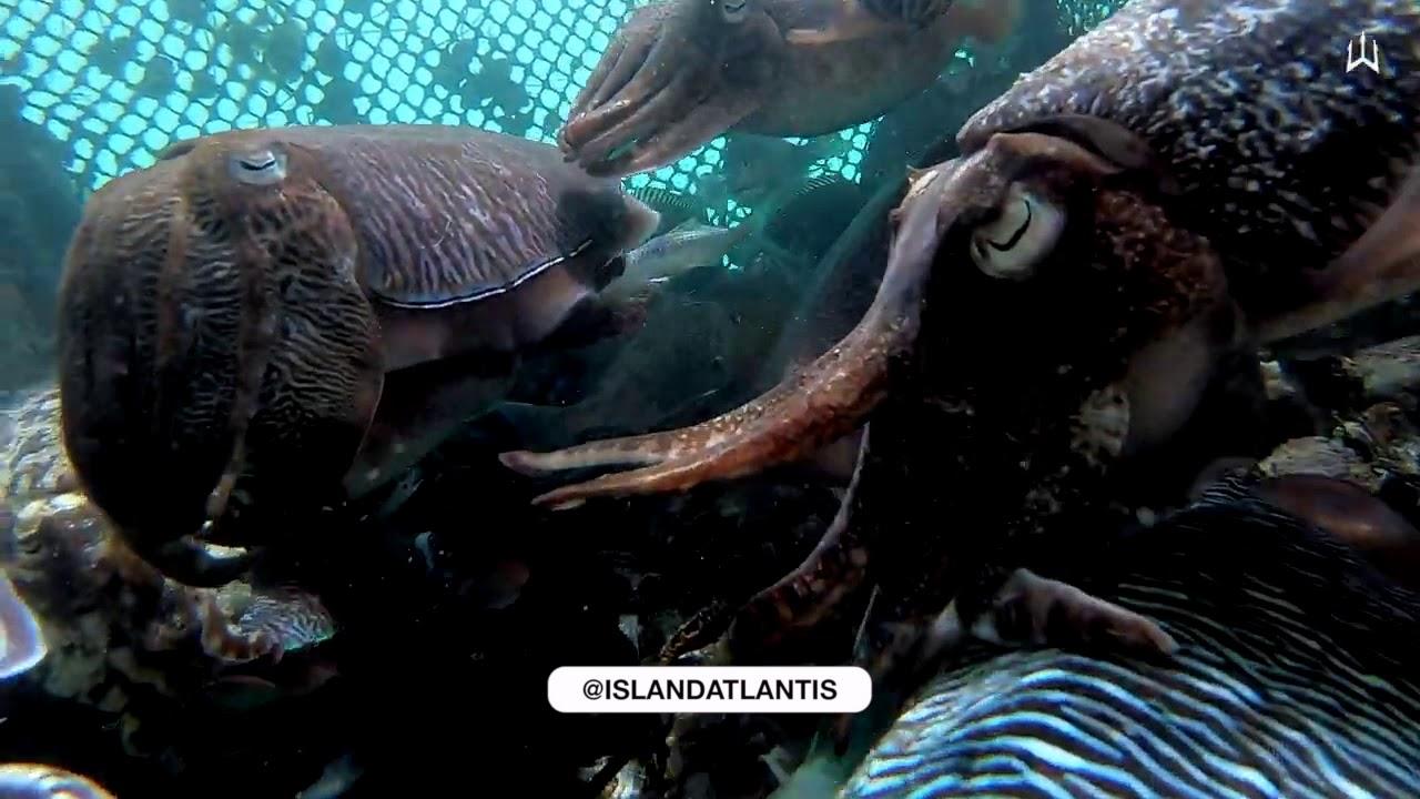 Feeding Our Giant Cuttlefish Enclosure