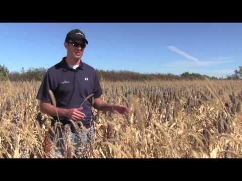 Millborn's Double Barrel: Striking Comparison with and without Pre-Emergent Herbicide