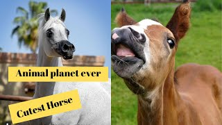 Cutest Horse in The world 🌎 | Supper funniest pets | Animal Planet Ever #13