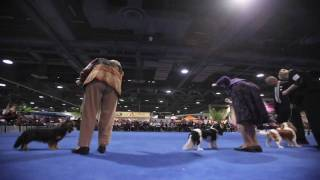 2009 Eukanuba/akc National Championships - Cavalier King Charles Spaniels Competition Time-lapse
