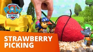 PAW Patrol | Strawberry Picking | Toy Episode | PAW Patrol Official & Friends
