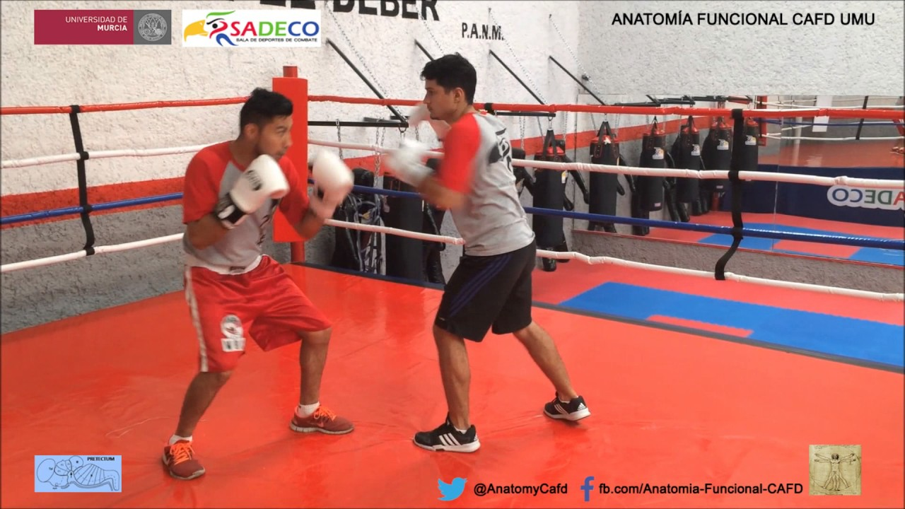 Boxeo 1: Castellano - YouTube