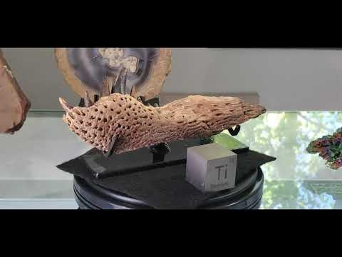 Leidyosichus Fossil Jaw from Montana from YouTube · Duration:  46 seconds