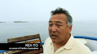 THE PACIFICO PARTNERSHIP,  A Story of Sustainable Aquaculture