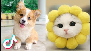 Cute TikTok Pets that Will 100% Make Your Day Better 😍❤️