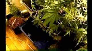 Гидропоника!Вариант домашнего выращивания(Документальное видео о выращивании методом гидропоники.Представлен цикл,от начала и до конца с применение..., 2015-03-09T07:35:38.000Z)