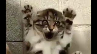 Komik ve Şirin Hayvanlar - Hayvanlar Alemi 1