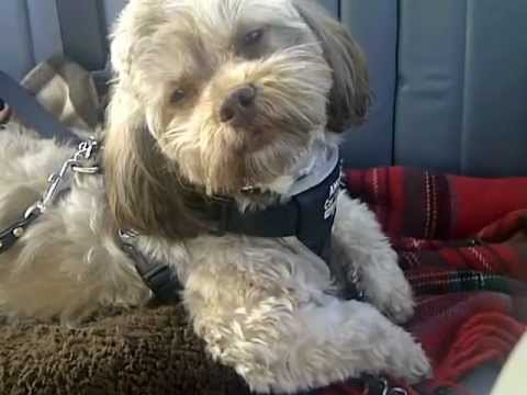 Cute singing dog Coco sings Coldplay!