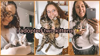 i adopted two kittens   mini vlog   *cuteness overload*