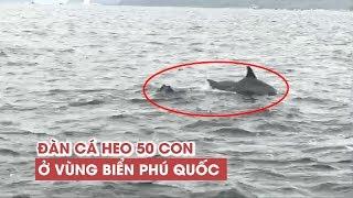 Sửng sốt vì đàn cá heo 50 con tung tăng ở vùng biển Phú Quốc