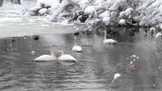凍てつく寒さの中、一瞬 ホンワカでした(^^)