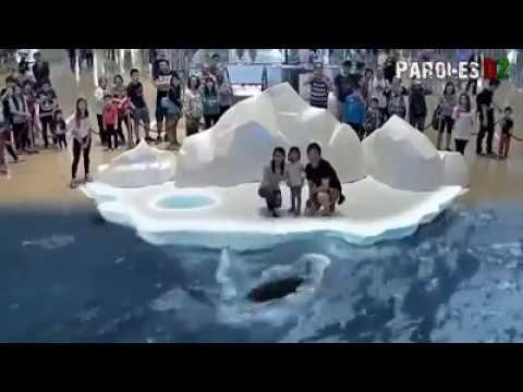 Amazing  Dubai Mall 7D show