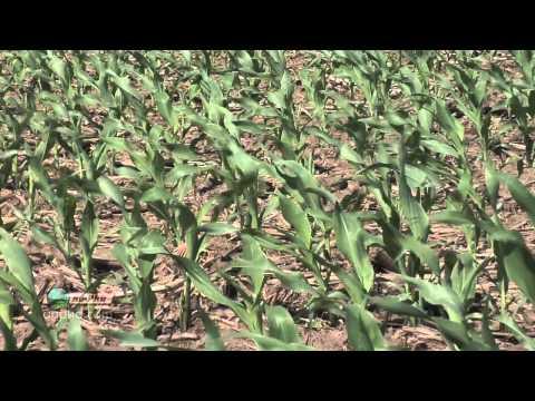 Corn Nematodes #714 (Air Date 12/11/11)