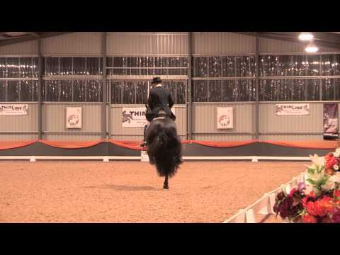 Django of Cacharel & Jeremy Janjic - Freestyle ThilLine Dressage with Altitude CDI 2014