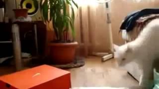 Как уходят коты Ver 2 Юмор! Прикол! Смех