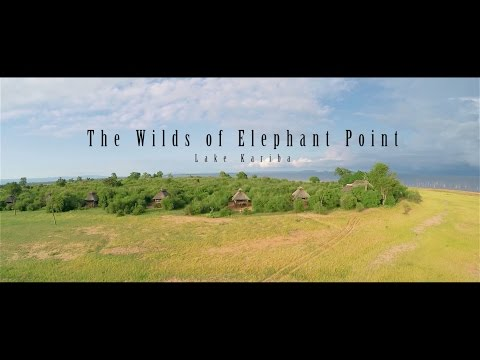 The Wilds of Elephant Point - Wildlife of Lake Kariba in HD