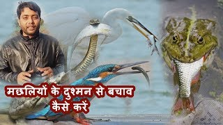 मछलियों के दुश्मन से कैसे करें बचाव, how to protect fish from birds and snakes